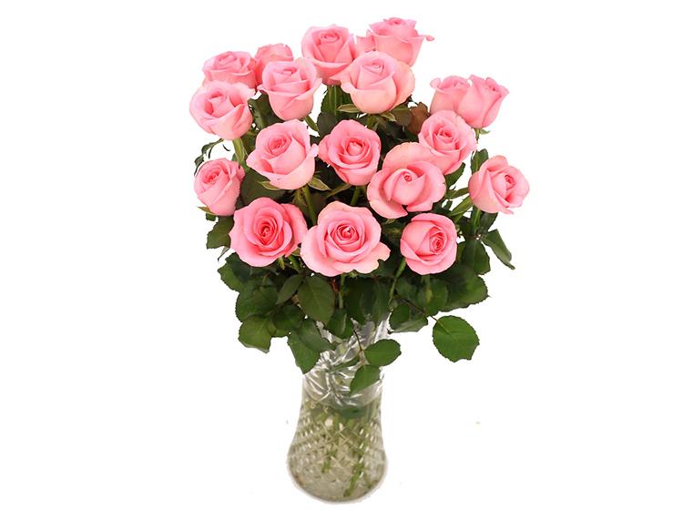 单枝粉玫瑰