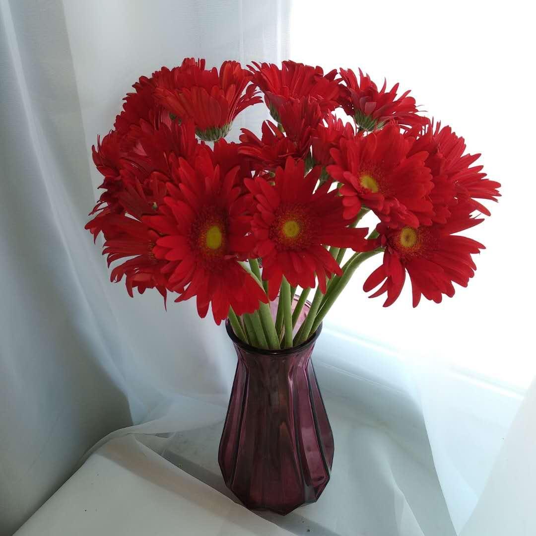 粉色太阳花、红色太阳花(10支赠8支防损耗 随机发货)