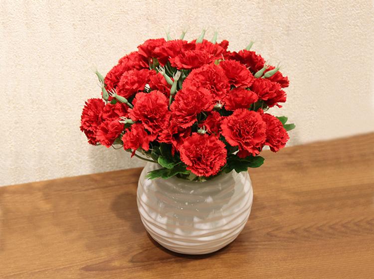 单枝红康乃馨