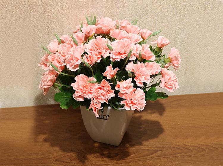 单枝粉色康乃馨