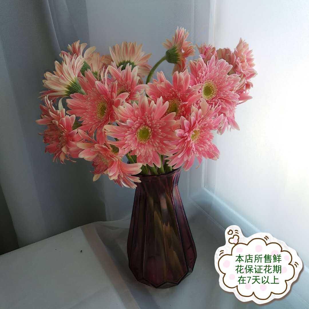 粉色弗朗(太阳花)18枝